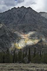 Paesaggio, landscape (paolo.gislimberti) Tags: parchinazionali nationalparks grandteton montagne mountains alberi trees conifers conifere paesaggiodimontagna mountainlandscape