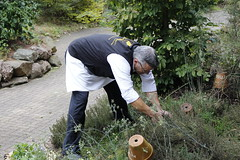 Dans le jardin des aromates