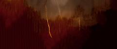 031016-3-1 (chrisfriel) Tags: blurtrees friel forest artlibres