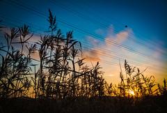 Vanhankaupunginlahti sunset (miemo) Tags: autumn clouds europe evening fall finland helsinki landscape nature oneplus3 powerlines silhouette sky sunset vanhankaupunginlahti viikki