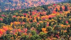 Fall Foliage NH (TimmyDennis) Tags: fall autmn new hampshire mountain mountains outdoors outdoor woods forest weather nature view vista