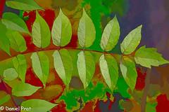 Hojas pintadas (dapray) Tags: hojas olerdola pintura verde geostate geocountry natura arbol dibujo paint painterly