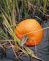 Nautical Pumpkin (Jim Frazier) Tags: 2016 autumn country ditch fall grasses halloween illinois jimfraziercom kane october pingreegrove pumpkins rural water q4