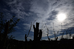 20161006_019_2 () Tags:    silhouette