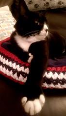 Fabulous Max  (KT-wu) Tags: blackandwhitecat maxthecat rescuecat cat kitty fabulous handsome tuxedocat