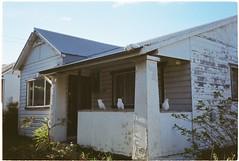 (tayn3) Tags: australia 35mm autoboy canon kodak colorplus colorplus200 wollongong nsw film analog cockatoo house gwynneville