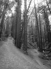 climb or crawl (1600 Squirrels) Tags: 1600squirrels photo 5dii lenstagged canon24105f4 tripod bw redwoodcreek redwoodregionalpark oaklandhills alamedacounty eastbay sfbayarea nocal california usa