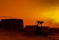 When the city burns (magicallights) Tags: nikon d3000 wanderlust india hampi travel lastlight goldensun silhouette sunset