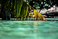 Blue Lagoon Island,  Bahamas (-gregg-) Tags: bahamas water lagoon bokeh trees palm
