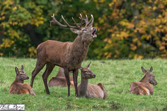 PDR_9079 (PhilReayPhotography) Tags: deer deerpark fountainsabbey studleyroyal