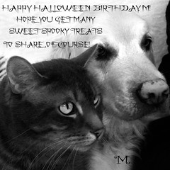 GRACE AND KARSONHALLOWEEN BIRTHDAYM (Cabinet of Old Secret Loves) Tags: halloween birthday m dog cat karson grace spooky spooks treats black white ghost ghostly ghosts card wishes