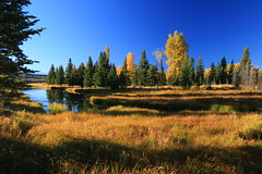 Linger in the shade of a kind old tree (alideniese) Tags: grandtetonnationalpark wyoming usa schwabacherslanding landscape waterscape autumn fall autumnal blue yellow sunny sunshine light shadow shade water river grass trees nature reflection outdoors