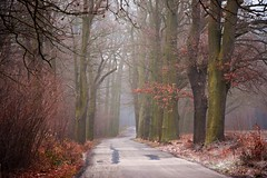 paths and roads (JoannaRB2009) Tags: alley avenue oak oaks tree trees morning winter autumn fall weather frost nature landscape view forest woods path road countryside milicz dolnyśląsk dolinabaryczy polska poland