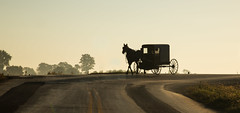 Simplicity (Tim Gupta) Tags: amish lancastercounty pennsylvania horse buggy carriage