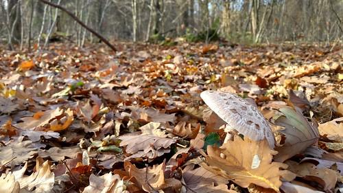 Pilz im Ober-Olmer Wald