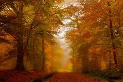 Last one of November.. (Marie.L.Manzor) Tags: landscape fall light colors forest trees tree path mist fog november 2016 autumn road sun morning mood dreamy nikon d610 marielmanzor 1000favs 1000favoris wow