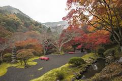 Garden of the White Dragon 白龍園 (Patrick Vierthaler) Tags: kyoto momiji fall 2016 autumn 京都 紅葉 もみじ 雨上がり 霧 日本画 日本画のよう