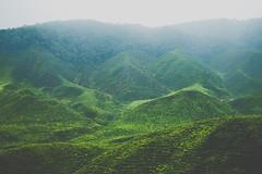 DSCF1135 (tzeyangtan) Tags: cameron highlands getaway green sgpalas tea plantation photography