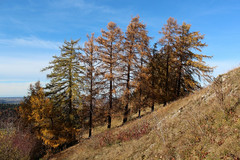 Herbst auf der Schwbischen Alb  Autumn in the mountains (Objektkontrast) Tags: badenwrttemberg schwbischealb jusi herbst autumn