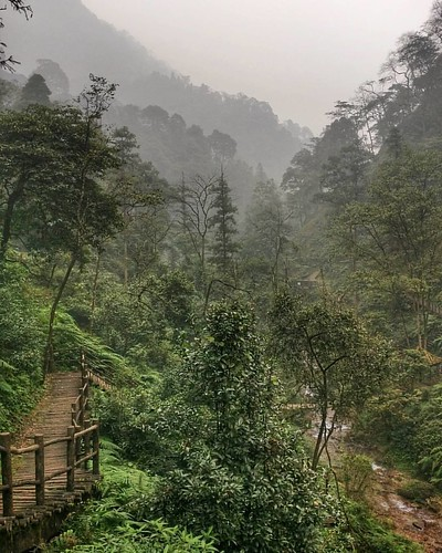 Tough job scouting awesome jungles of Emei Mountain today.  😁😁😁👍👍👍