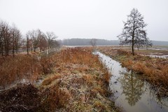 winter (JoannaRB2009) Tags: winter autumn fall tree river water reflections meadow landscape view nature dolnyśląsk dolinabaryczy polska poland
