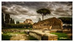 Foro Romano (Photo Holica) Tags: fororomano rom ruin clouds cloud tree wall stonework masonry