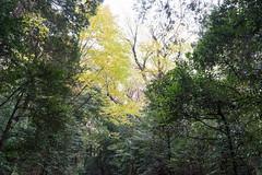 A fine day (m_saito) Tags: harajuku yoyogi park