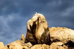 WATCH TOWER - VMP Photography By BRETT JOZSA (vmproductions) Tags: brettjozsa vmp eagleeye watchtower rockypeak peak rocks hawk eagle 70200 canon photo photography
