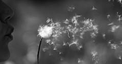 1507 Puste Blume (lars.kilian) Tags: pusteblume blowball dandelion black white face mouth