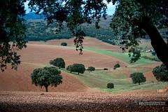 Jurtiga /Alhama-de-Granada) (Lucas Gutirrez) Tags: jrtiga alhama encinar camposdelbor cereales granada paisajes landscapes granadanatural lucasgutierrezjimenez