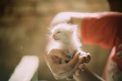 (Just A Stray Cat) Tags: cats baby film look field analog cat 35mm canon 50mm nikon dof kodak bokeh grain kitty kittens s 5d mm analogue manual 12 nikkor 35 160vc portra vc depth ai f12 160 filmlook ainikkor50mmf12s