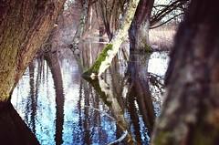 Spiegelung (Hoffnungsschimmer) Tags: trees winter tree water wasser minolta flood bach 5d konica dynax fluss bume baum hochwasser yaren