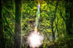 Por el bosque (Uxo R (Fuera de onda)) Tags: espaa verde luz corua galicia bosque verano chelo reflejos mandeo nikond5100 uxorivas colantres