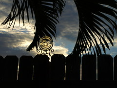 Moon Struck (Shelby's Trail) Tags: wood sky moon glass silhouette clouds sunrise fence palm mybackyard fronds hff eightdaysaweek sooc twtme fencefriday ~~fencefriday~~nottheoriginal