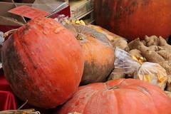 Aspettando la carrozza (Chiara Chiarachiara) Tags: autunno zucche verdura piovedisacco