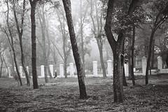 027 (tatianaorel) Tags: white black film fog 35mm zenit парк аналоговый
