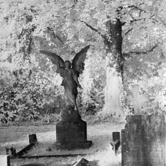 What angel wakes me (Skink74) Tags: uk morning trees england blackandwhite bw sculpture sunlight 120 6x6 film monument cemetery grave leaves statue angel rollei ir mono hampshire bronica rodinal hursley r72 standdevelopment s2a zenzabronicas2a infrared400 zenzanon150f35 zenzanon150mm135 filmdev:recipe=8005 s2am058