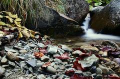 Natura morta...o quasi (EmozionInUnClick - l'Avventuriero's photos) Tags: foglie laga cascata