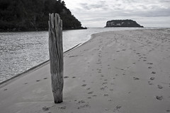 Old Pole (C & R Driver-Burgess) Tags: ocean sea bw beach mouth river island coast still sand waves flat post harbour footprints pole shore weathered piling pawprints dogprints