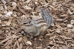 Squirrel (Colin Hodges) Tags: 2 geotagged 51 1130373721 1543135071