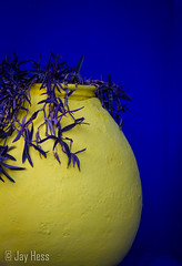 Contrastes (Jay Hess) Tags: blue yellow canon morocco marrakesh 28135mm 2013 jardinsdemajorelle eos7d