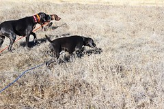 "BRW Field Day - Kenai, Benelli, Roxie • <a style=""font-size:0.8em;"" href=""http://www.flickr.com/photos/66999112@N00/11201353144/"" target=""_blank"">View on Flickr</a>"