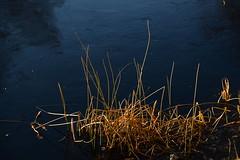 DSC_2581 (Kristine Bergheim) Tags: fjre grimstad dmmesmoen