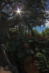 Swiss Family Tree House (joe.diebold) Tags: family house tree florida swiss magic disney treehouse disneyworld waltdisneyworld magical magickingdom adventureland swissfamilyrobinson swissfamilytreehouse