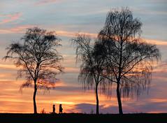 Evening walk (RainerSchuetz) Tags: sunset tree silhouette day sundown cloudy birch blinkagain blinksuperstars