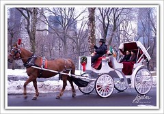 Central Park Carriage Ride (flickonce) Tags: park street nyc newyorkcity trees winter people newyork love nature garden children nikon colorful centralpark manhattan natureza naturallight flickonce silviagerberphotography