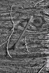 Door handle (Artico7) Tags: door wood handle rusty ivy rough decadence