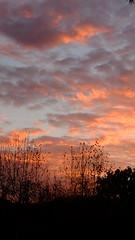First Light (J_Jacks1985) Tags: sky plants clouds sunrise fuji fujifilm losangelescounty fujix20 fujifilmx20