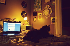 cozy night in | 28/365 (♥ brooke gehringer) Tags: life cat bedroom laptop kitty bedtime comfy tumblr