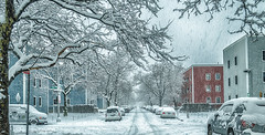 SnowDay (Kingfranco) Tags: road new york trees winter snow ny newyork storm cars america snowflakes sticks apartments branches united queens states flakes twigs {vision}:{sky}=0767 {vision}:{outdoor}=0969